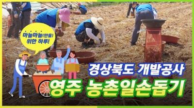 경상북도개발공사 영주 농촌일손돕기